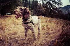 Valley Dog