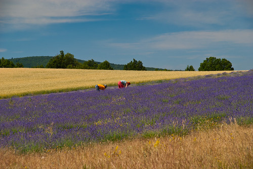 Provence_09_387