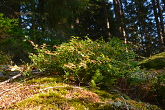 "Menzenschwand near Schluchsee ""Black Forest/ Germany"" (barrabez_germany) Tags: germany waterfall wasserfall gletscher landschaft schwarzwald blackforest wandern naturepark schluchsee feldberg stblasien kluse bergbau southgermany naturschutzpark morne menzenschwand krunkelbach tallandschaft"