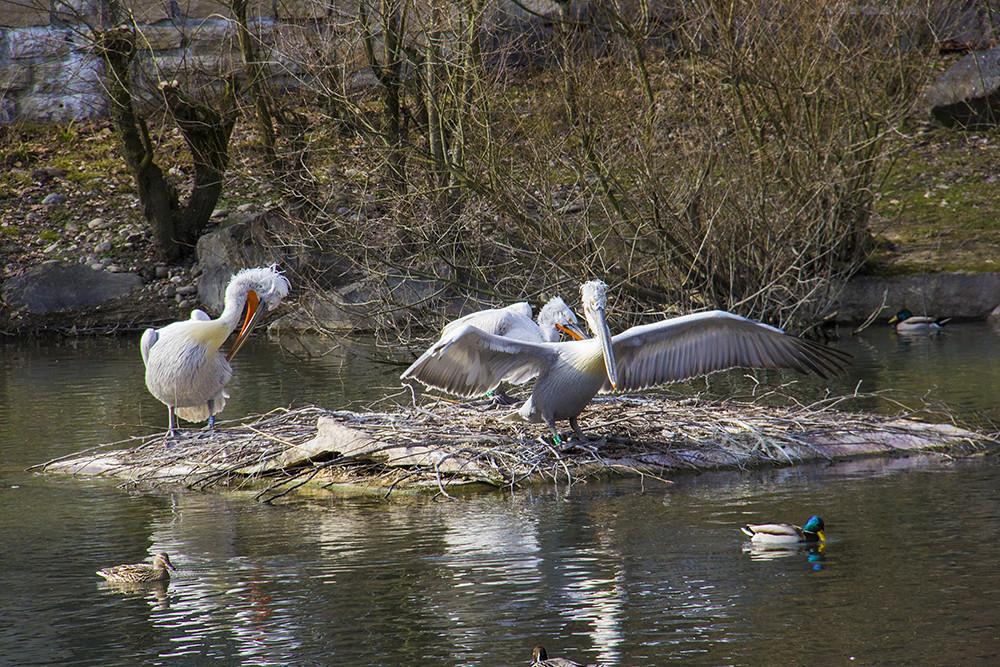 Tierpark aves
