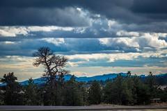 BAM! As soon as we enter Colorado, we see trees again.