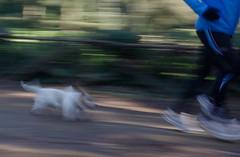 Cane futurista (lorenzomameli) Tags: dog cane running panning corsa futurista