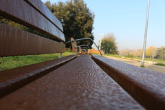 (danielebenvenuti) Tags: wood autumn trees brown leaves foglie alberi bench outdoors drops dew rugiada marrone legno gocce panchina linee