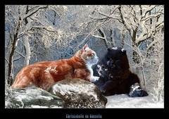 "Mes chats Vous souhaitent une Bonne Année 2017 (Christabelle12300 & Pitchounet) Tags: catmoments "" lovelymotherearth"""