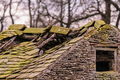 Owl watching-5 (Lee Myers - aka mido2k2) Tags: bird owl little littleowl owls avian country photography wild wildlife nature natural explore flickr nikon d5300 sigma 150500mm dslr villager prey barn countryside rural peak district derbyshire uk yorkshire