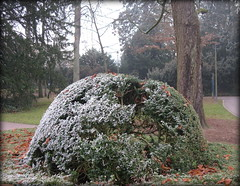 Christmas pudding, Luxembourg (Wagsy Wheeler) Tags: luxembourg luxembourgcity park parc bush christmaspudding nature tree frost garden