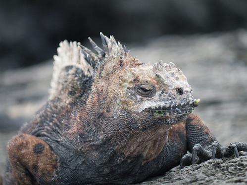 """Galapagos-123.jpg • <a style=""""font-size:0.8em;"""" href=""""http://www.flickr.com/photos/91306238@N04/31630349884/"""" target=""""_blank"""">View on Flickr</a>"""