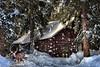 WINTER IS THE TIME ... (Aspenbreeze) Tags: winter cabininsnow snow snowing buckdeer logcabin trees winterseason wildlife wildanimal deer snowflakes grandmesa grandmesacoloraod mountains colorado bevzuerlein aspenbreeze moonandbackphotography
