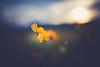 goodnight sun (shane holsclaw) Tags: flower sun sunset nature fieldofflowers westvirginia sigmaart 50mm yellow