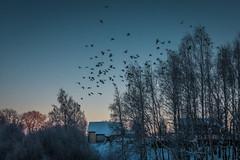 Птицы греются