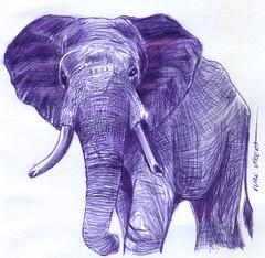 elefante a lapicero (ivanutrera) Tags: draw dibujo drawing dibujoalapicero boligrafo animal wild wildlife sketch sketching elefante elephant pen lapicero dibujoaboligrafo