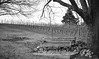 bench-4_red_hi_contrast_crop (old_hippy1948) Tags: bench vineyard winery