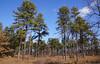 DSC07289 (dr.tspencer) Tags: abanypinebushpreserve albanypinebush albany albanyny winter landscape hiking nature naturepreserve
