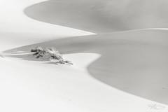 Crow... (Rkitichai) Tags: crow landscape landscapephotography minimalist blackandwhite blackandwhitelandscape monochrome travel travelphotography travelnutzmn fbmetravelnutzrpt rkitichaicom wanderlust nature desert sand dunes outdoor deathvalley nationalpark northamerica