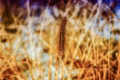 Winter grass (n.karpiewska) Tags: grass trawa winter zima poland polska europe europa wroclaw wrocław pentax kx tamron park topacz nature bokeh blurredbackground colors january walk spacer