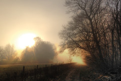 Mystic sunset (Frank ) Tags: fog mist morning beauty beautiful rising sun sunset sunrise winter fall autumn weather apple iphone warmth glow europe limburg holland netherlands hot frost misty frnk painterly epic tree meadow field orton