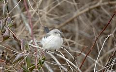 look... it's a bird! (Dotsy McCurly) Tags: bird animal local park nature beautiful bokeh dof 600mm closeup canoneos5dmarkiii nj tamron
