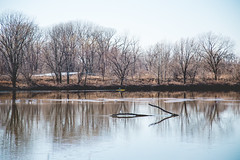 Celebrate. (Angela.Dee) Tags: quincybay mississippiriver water birds logs seagull kayak canon 6d 24105mml cy365 quincyil