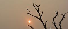 Beautiful Moment (Sajjat Hossain Simul) Tags: sun bird natuer