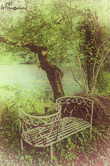 The Vintage Love Seat (Gavmonster) Tags: wood old uk bridge trees england plants brown sunlight lake tree castle overgrown leaves rock metal forest vintage gold sussex countryside leaf woods nikon rust ditch westsussex fort britain dramatic lodge loveseat copper keep growing southeast ferns ponds plank horsham saxon earthwork sedgwick southeastengland 12thcentury d7000 sedgwickhouse sedgwickpark nikond7000 gswphotography vegetationgrowth sedgwickcastle