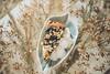 mu-4 (annieveliinablogi) Tags: ruokakuvat leipominen mustikkapiirakka