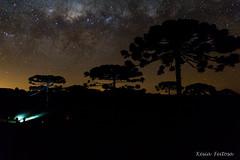 Procurando estrelas (Kesia Feitosa) Tags: nature night stars outside estrela estrelas noite vialactea auracrias