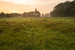 [15P52F41] Morgen (b-oern) Tags: feld wiese krefeld landschaft sonnenaufgang morgen projekt52 projekt5241