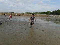 10.12.2015-AngloSingapore-BangPu-100 trees (9) (pattfoundation2014) Tags: thailand education mangrove treeplanting bangpu pattfoundation anglosingapore