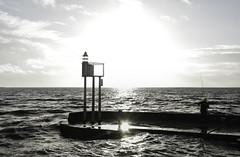 Sunlight of Fisherman (Mathieu Lavenu) Tags: sun fish port soleil fisherman wave pêcheur poisson haute fouras marée