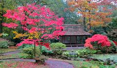 Japanese garden (Frans Schmit) Tags: autumn tree japanesegarden denhaag thehague clingendael japansetuin fransschmit