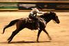RAWF15 JSteadman 0115 (RoyalPhotographyTeam) Tags: sun royal rodeo 2015 rawf nov08