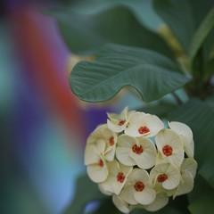 Garden flowers (Simone Scott) Tags: flowers cayman caymanislands caymanbrac simonescott