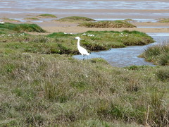 Bird (daveandlyn1) Tags: grasses water sea beach bridgecamera fz18 panasonic thewirral westkirby uk