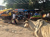 Market in Sawai Madhopur. iPhone 5s (Ann Kruetzkamp) Tags: town sawai madhopur sawaimadhopur ranthambhorenationalpark ranthambhore national park photojournalism photography photo market intrepid travel tour tourism cycle rajasthan bicycle cycling