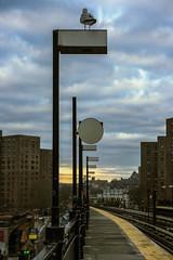 225th Station (Alexander Marte Reyes) Tags: bird trainstation bron newyorkcity nikond750 nikonphotographers clouds