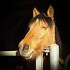 Feel Good...!: (Sivispacem...) Tags: sigma 1835 18 art hsm cheval horse funny color animal portrait