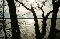 Chilled Morning (Georgie_grrl) Tags: christmascottagechoir choir friends friendship social music princeedwardcounty lakeontario winter pentaxk1000 rikenon12828mm lake water frozen trees icy morning sunlight ice beads