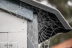 Spider art (Jérôme Cousin) Tags: nikon d700 tamron 2470 28 araignee spider toile cold froid ice glace gelé