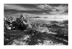 (Luminous☆West) Tags: sigma dp dp1 dp1m merrill foveon landscape sigmamerrill x3f snow blackandwhite blackwhite black white monochrome sdim0784 luminouswest luminous west mountains fog bw colorado
