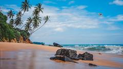 Ocean view (rn_bv) Tags: stone sand color liveauthentic океан шриланка sea landsape sun palm beach ocean livefolk пейзаж bird boat shore srilanka seaside