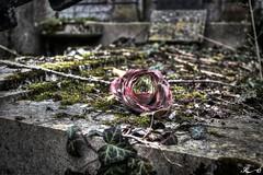 Cimetière de la Madeleine 0084_5_6 (Sleeping Spirit) Tags: cimetière cemetary cemetaries madeleine amiens