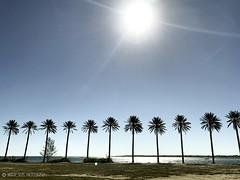 IMG_1138-006 (DRAFDESIGNS) Tags: landscapephotography drafdesignsphotography golfcoursephotos oceanclubgolfcourse ocean oceanview atlanticocean paradiseislandbahamas tree rowofpalmtrees