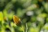 Ψίνθος (Psinthos.Net) Tags: ψίνθοσ psinthos winter january ιανουάριοσ γενάρησ χειμώνασ φύση εξοχή countryside nature afternoon απόγευμα απόγευμαχειμώνα χειμωνιάτικοαπόγευμα leaves φύλλα φύλλο leaf light shadow φώσ σκιά φώσήλιου φώσηλίου sunlight sunrays αχτίνεσήλιου κιτρινάκι κιτρινάκια yellowflowers yellowflower κίτρινολουλούδι κίτριναλουλούδια χόρτα greens wildflower wildflowers άγριαλουλούδια άγριολουλούδι αγριολούλουδα αγριολούλουδο λουλούδι flower winterflower λουλούδιχειμώνα μέρα day