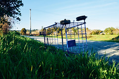 this is not a shopping cart (nocklebeast) Tags: nrd cart santacruz scphoto ca usa riverwalkl2070560