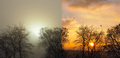 Skyscapes-Sunrise - Mist one day sun the next (David Packman) Tags: sunrise mist skyscapes