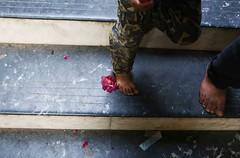 War-Time Rose (Mayank Austen Soofi) Tags: delhi walal rose flower stair
