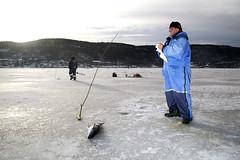 (Beathe) Tags: sande sandebukta ice winter icefishing img1222 sei saithe pollachiusvirens