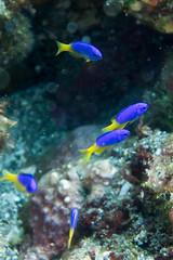 20150816-DSC_6728.jpg (d3_plus) Tags: sea sky fish beach japan scenery underwater diving snorkeling  shizuoka    apnea izu j4  waterproofcase    skindiving minamiizu       nikon1 hirizo  1030mm  nakagi 1  nikon1j4 1nikkorvr1030mmf3556pdzoom beachhirizo misakafishingport  1030mmpd nikonwpn3 wpn3