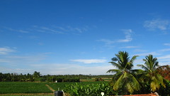 IMG_0043 (sathishsk) Tags: blue vacation sky cloud india plant green nature field grass canon landscape healthy village with outdoor live fresh powershot health farms agriculture chennai tamil gobi tamilnadu erode agri gobichettipalayam 710is livewithnature
