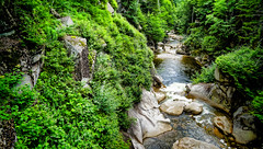 WhiteMountains_360 (allen ramlow) Tags: new travel bridge trees summer white mountains landscape rocks colorful stream sony nh hampshire gorge flume a6000 sel1670 ilce6000